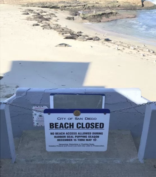 The 2018 Pupping Season has begun at Casa Beach_