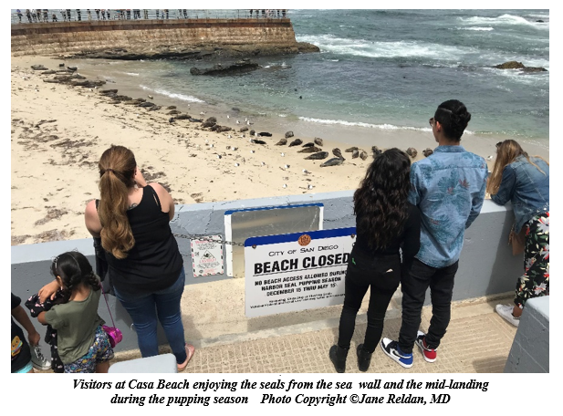 Visitors Enjoying the La Jolla Seals from the mid-landing during the harbor seal pupping season